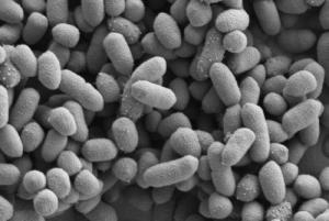 howbacteriacommunicate