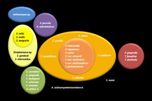 Microbiología Periodontal (Especialidad en Periodoncia)